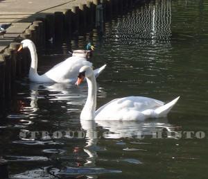 Stratford Park Feb 2016 P Stevens